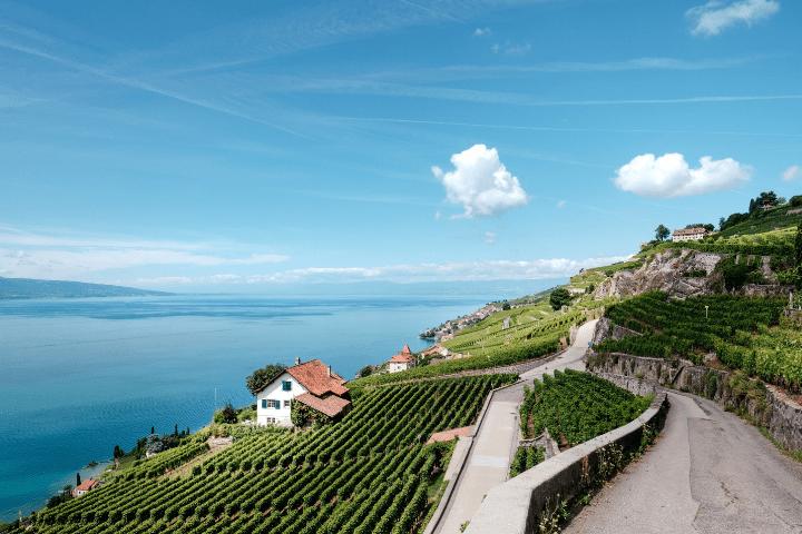 Terraced vineyards Lavaux Switzerland