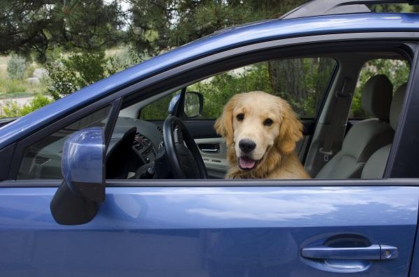 Car Hire Excess Insurance Uk Axa