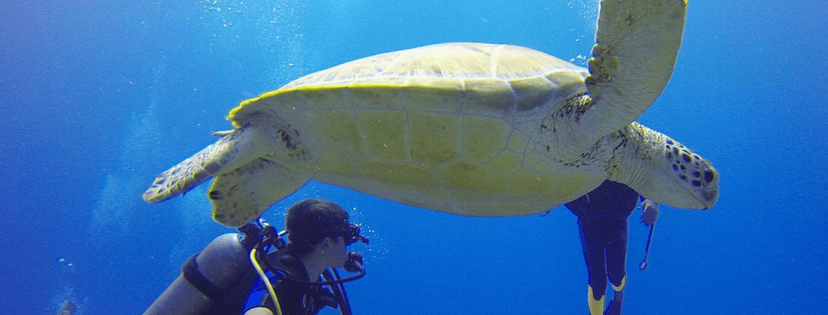 Mexico scuba diving